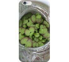 Winter Sown Giant Red Mustard Seedlings iPhone Case/Skin