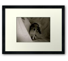 She's a Shy Peach Framed Print