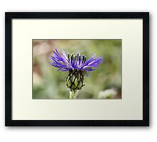 What Is It? Framed Print