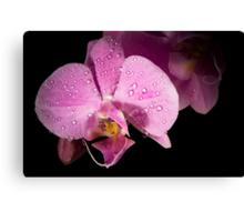 Beautifull orchid Canvas Print