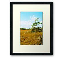 Dade County Pine Framed Print