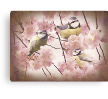 Birds in Cherry Blossoms Canvas Print
