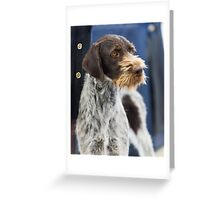 Loud German Wire-Haired Pointer