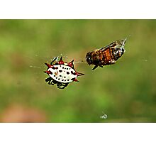 Jewelled Spider and dinner guest Photographic Print