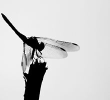 Back Lit Dragon Fly 2 by Dreebs