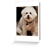 Adorbz Bichon Frise