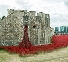 Poppies at The Tower by Sue Robinson
