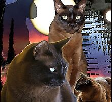 Burmese Cats and the Moon by amanda metalcat dodds