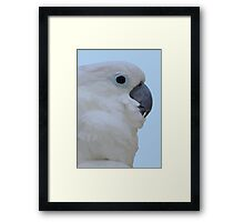 Side Portrait Of A Blue-Eyed Cockatoo Isolated Framed Print