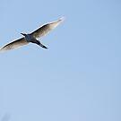 Egret by richeb