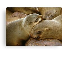 'Cuddling Cousins' - Cape Fur Seals  Canvas Print