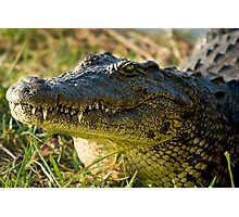 Chobe National Park, Botswana. 2009 III Photographic Print
