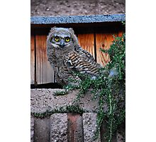 Baby Owl Photographic Print