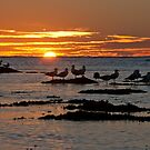 Sunset over Ningaloo by Erik Schlogl