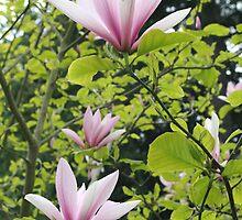 """Tulip Tree Blossoms"" by Lynn Bawden"