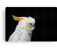 Beautiful specimen of parrot Canvas Print
