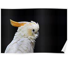 Beautiful specimen of parrot Poster