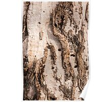 Mallee Tree  Poster