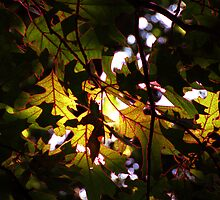 Sheet of leaves - Red by Doug Gruber
