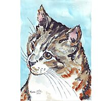A Tabby superb! Photographic Print