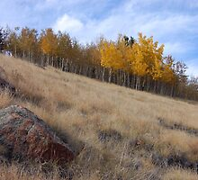Colorado Aspens in Fall by rigelmac
