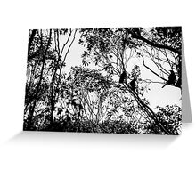 Currawongs Greeting Card