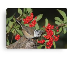 crested tit Canvas Print