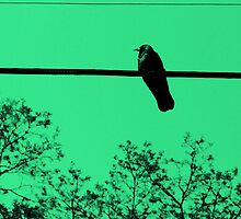 As the Crow Flies by Zolton