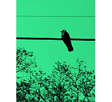 As the Crow Flies Photographic Print
