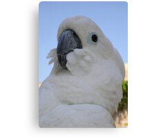 Ruffled Feathers Of A Blue Eyed Cockatoo Canvas Print