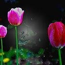 Three Tulips by Zolton