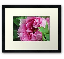 Pink April Tree Peony Framed Print