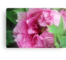 Pink April Tree Peony Metal Print