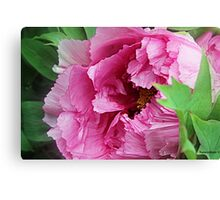 Pink April Tree Peony Canvas Print