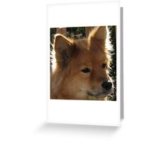 Cool Finnish Spitz