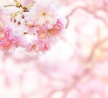 Spring Flowers by yulia-rb