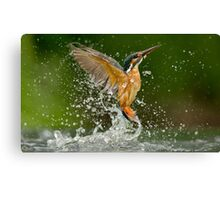 Diving Kingfisher Canvas Print