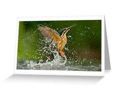Diving Kingfisher Greeting Card