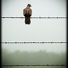 Do you mind? I am trying to sit on this barbed wire fence and contemplate the meaning of life and you&#x27;re disturbing me... by Jenny Ryan