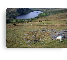 Healy Pass view Canvas Print