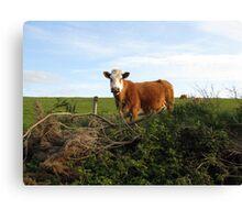 Rural Irish farm scene Canvas Print