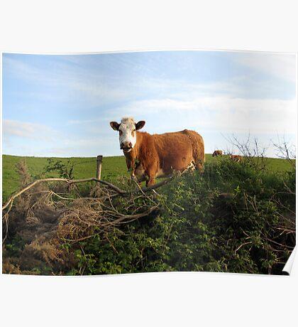 Rural Irish farm scene Poster