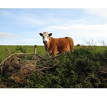 Rural Irish farm scene Photographic Print