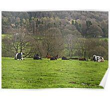 Cow Creche Poster