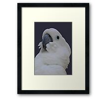 Ruffled Feathers Of A Blue Eyed Cockatoo Isolated Framed Print