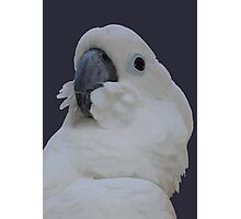 Ruffled Feathers Of A Blue Eyed Cockatoo Isolated Photographic Print