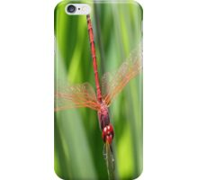 Closeup of Red Skimmer or Firecracker Dragonfly iPhone Case/Skin