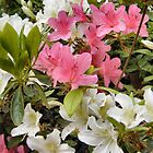 Rhododendrons by Shoshonan