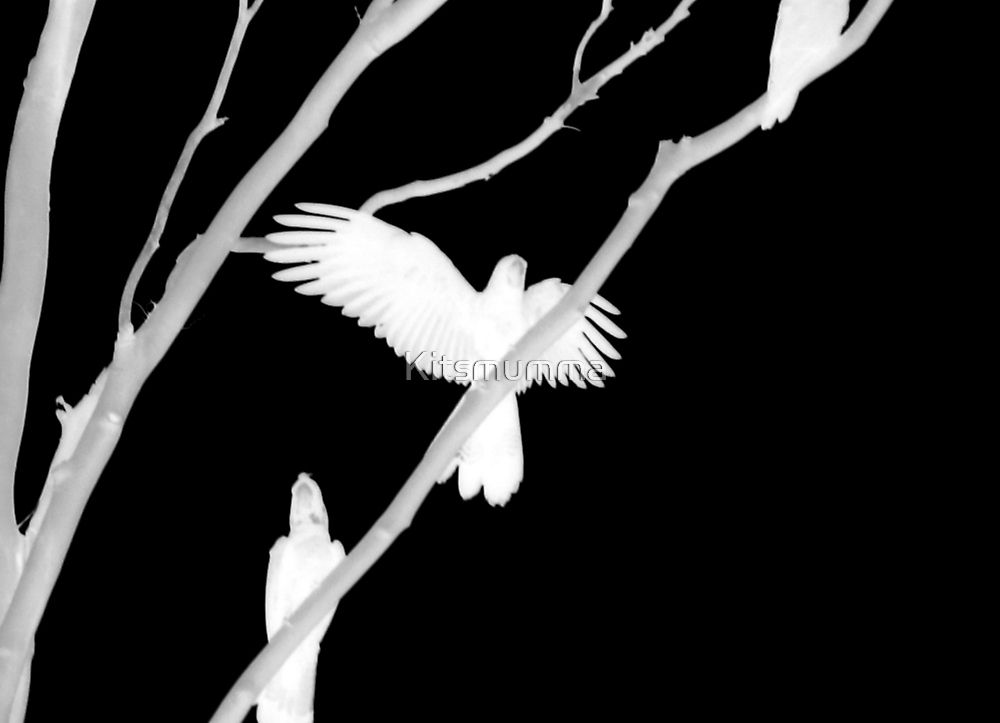 Birds in Black and White by Kitsmumma