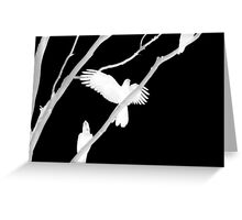 Birds in Black and White Greeting Card
